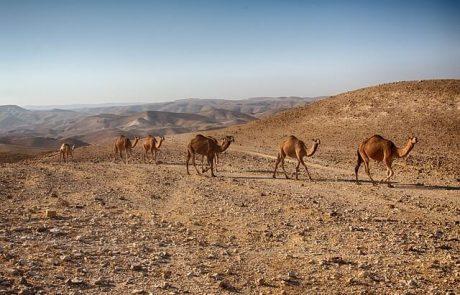 אקסטרים בישראל